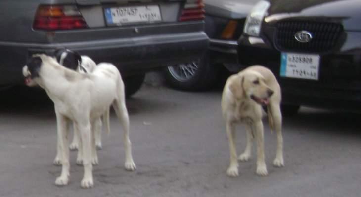 الكلاب الشاردة تغزو النبطية وصور ومخاطرها تتعاظم!