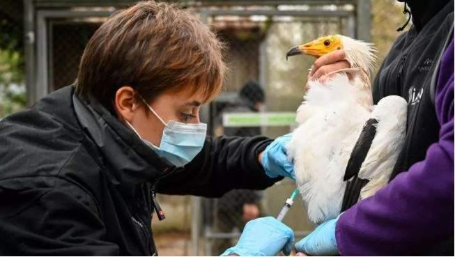 الزراعة الفرنسية: فيروس أنفلونزا الطيور بالبلاد تحت السيطرة ولا ينتقل للإنسان