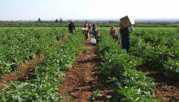 فقدان مادة المازوت يهدد القطاع الزراعي