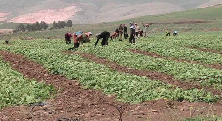 النقابات والهيئات الزراعية في البقاع ترفع الصوت: الحكومة تحارب القطاع الزراعي