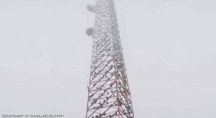 مئات النسور تحتل برج اتصالات في اميركا