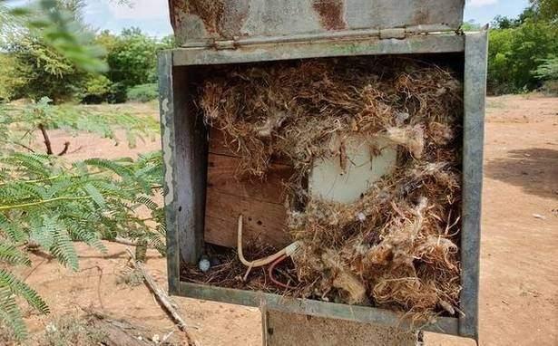 سكان قرية هندية عاشوا 45 يوما في الظلام لإنقاذ طائر بنى عشه داخل صندوق الكهرباء