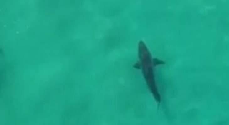 الشرطة في بيرو: ضبط 11 طنا من لحوم أسماك القرش المقطعة