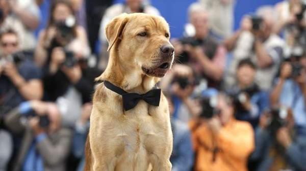 أول قضية سوء معاملة كلب تحال الى المحاكمة في أميركا اللاتينية