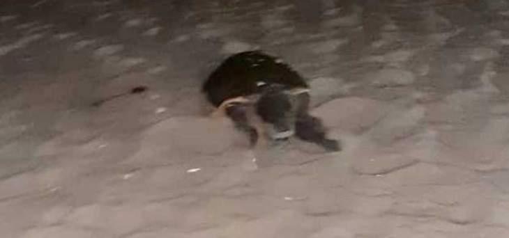 النشرة: العثور على سلحفاة كبيرة على المسبح الشعبي بجانب الملعب البلدي بصيدا