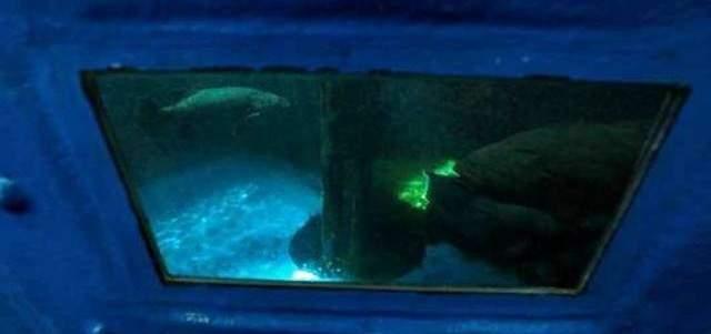 البنتاغون يدرس برنامج استخدام السمك لأغراض استخباراتية