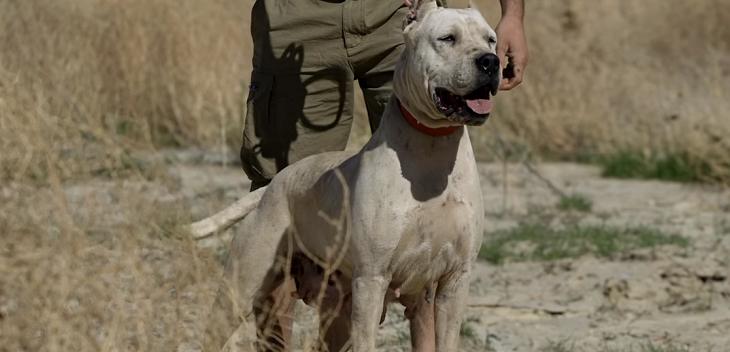 النشرة: اصابة مواطن بجراح جراء تعرضه لعضة كلب في المصيلح