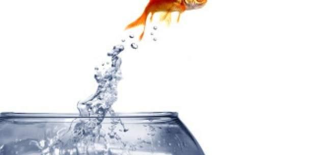 عودة سمكة مثلّجة إلى البحر