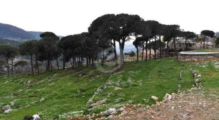 الاخبار: المنطقة الصناعية في المتين تهدد بتدمير الغابة ورئيس البلدية ينفي