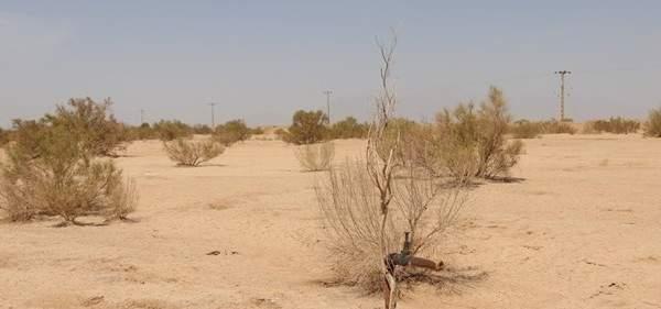 خبراء إیرانیون یبتکرون تقنیة للحفاظ على النظام البيئي الصحرواي