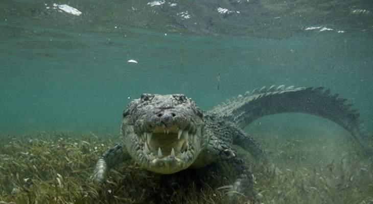 تجمّد تماسيح في بحيرة بكارولينا الشمالية