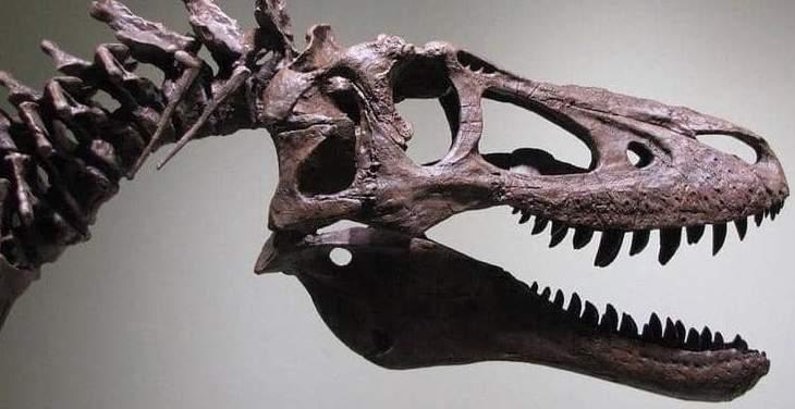 """عرض ديناصور للبيع على موقع """"إيباي"""""""