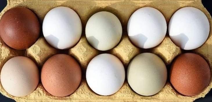 خبراء تغذية ألمان يدافعون عن تناول البيض