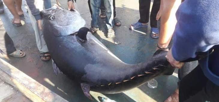 """فلسطينيون يصطادون سمكة """"تونا"""" تزن 160 كيلوغراما في غزة"""