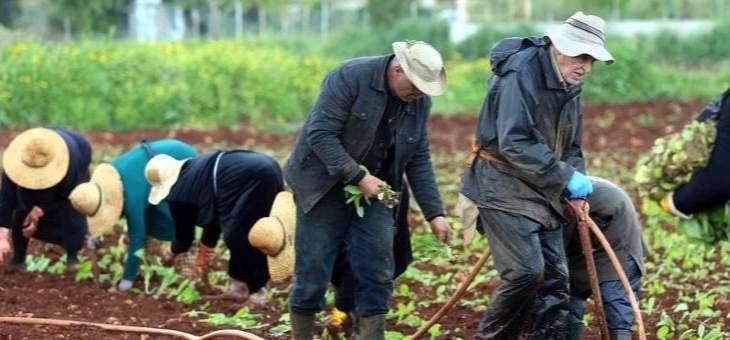 انطلاق زراعة التبغ في الجنوب والمتطلبات في ارتفاع متواصل!