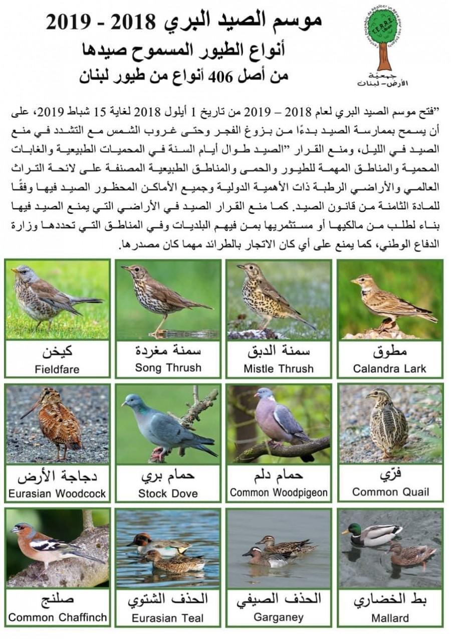 هذه الطيور المسموح صيدها وهذه عقوبة المخالف