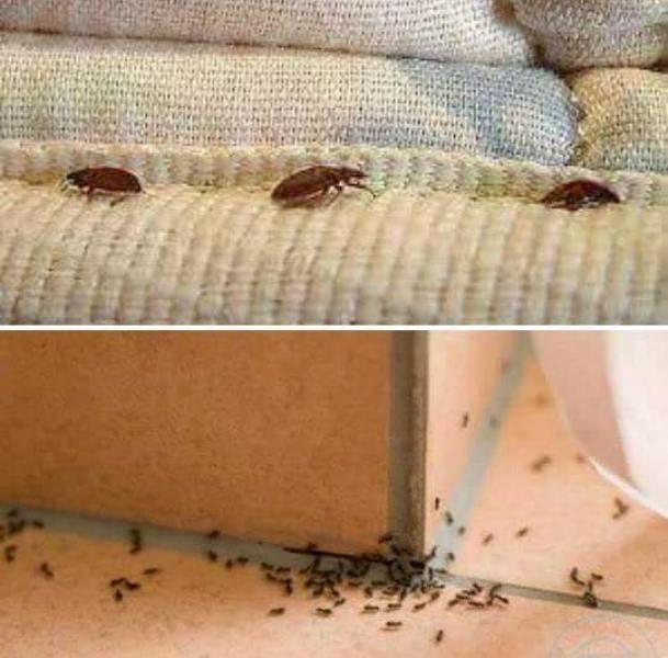 سبب وجود النمل في البيت إحذر الامر خطير معجزة كبيرة سبحان الله Youtube