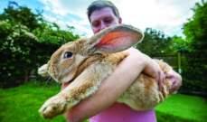 تعرفوا إلى أكبر أرنب في بريطانيا!