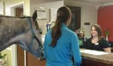 قضت وقتاً ممتعاً في إحدى غرف الفنادق ولكن مع حصانها