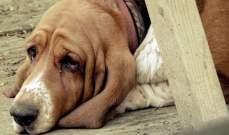 كلب يموت شوقاً في إنتظار عودة صاحبه!