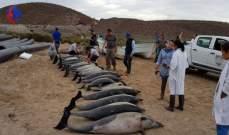 دلافين تنتحر بشكل جماعي!