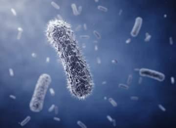 بكتيريا تلدغ وتنهش لحم الإنسان... تعرف عليها