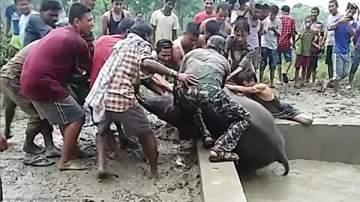 إنقاذ فيل من الغرق..بالفيديو