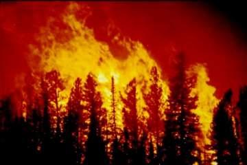 الحرائق تجتاح كاليفورنيا!