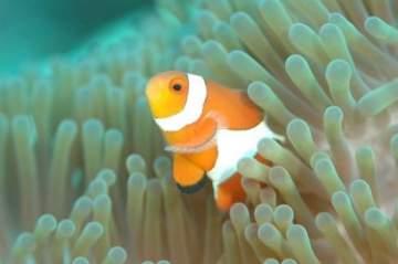جومانا وهبي تكشف عن تفسير السمك في الأحلام