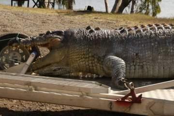 قتل أكبر تمساح في العالم..بالصور