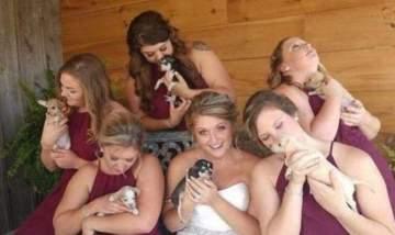 عروس تستبدل الازهار بالpuppies في حفل زفافها