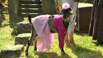 """بالفيديو.. ليتوانيا نظمت مسابقة لاختيار ملكة جمال """"الماعز"""""""