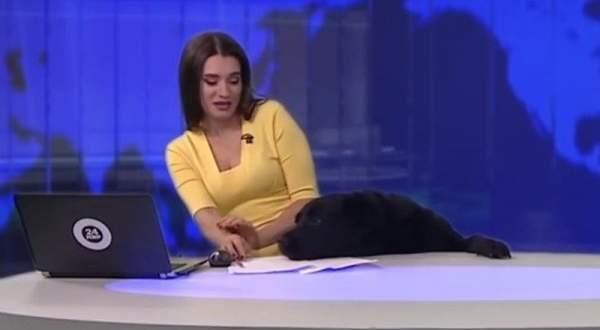 كلب يقتحم نشرة إخبارية على الهواء.. بالفيديو