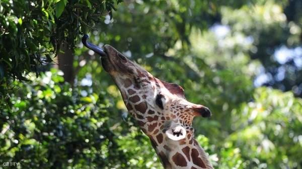 هذه الحيوانات مهددة بالإنقراض