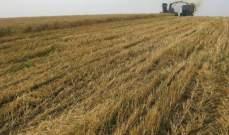 الجزائر: شراء 500 ألف طن من قمح الطحين في مناقصة