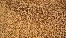 الجزائر: طرح مناقصة لشراء 50 ألف طن من قمح الطحين