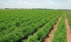 مصر تعكف على وضع معايير لتصدير الحاصلات الزراعية للدول العربية