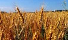 انخفاض أسعار القمح بنسبة0.58% إلى 4.745 دولار للبوشل