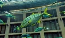 حوض سمك ذكي يشكل تهديد لكازينو من قبل قراصنة المعلومات!