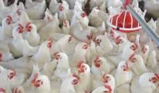 وزارة الزراعة الصينية تؤكد تفشي انفلونزا الطيور في مزارع للسمان