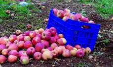 وزارة البيئة الإماراتية تفرض حظراً على استيراد التفاح من لبنان