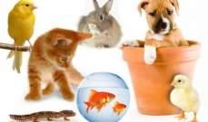 قريبًا.. تقنية جديدة لترجمة لغة حيوانك الأليفة