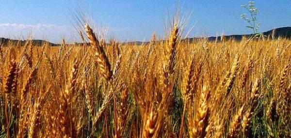 الرئيس الروسي يعد نظيره الفنزويلي بإرسال 60 ألف طن من القمح شهرياً