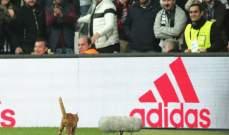 قطة تدخل بيشكتاش في مأزق مع الإتحاد الأوروبي